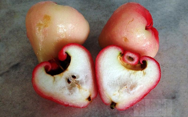 Como comer o Jambo Rosa, uma fruta que a árvore tem cheiro maravilhoso