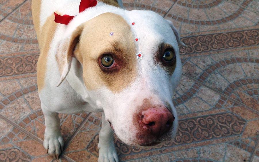 Esses petshops fazem os dogs passarem cada vergonha (Foto: Alan Corrêa)